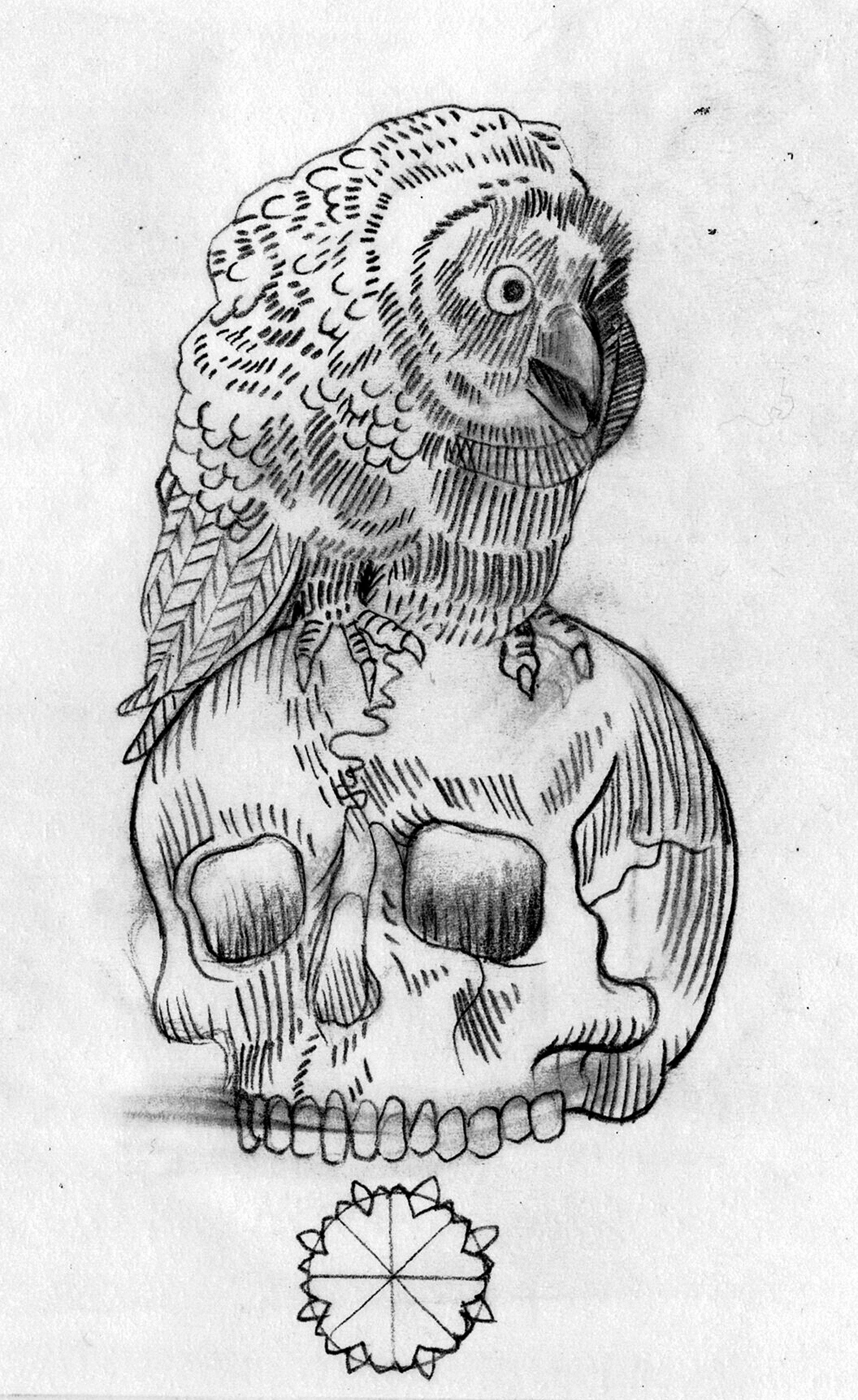 Owl Skeleton Drawing - photo#7